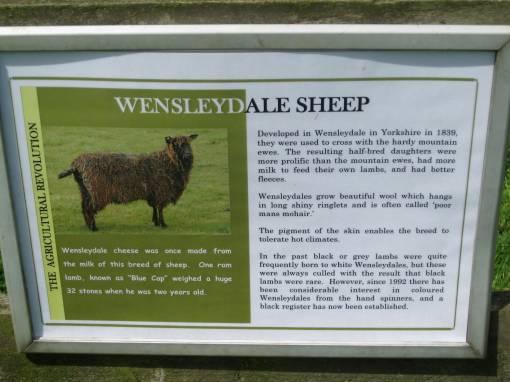 BlackWensleydale1